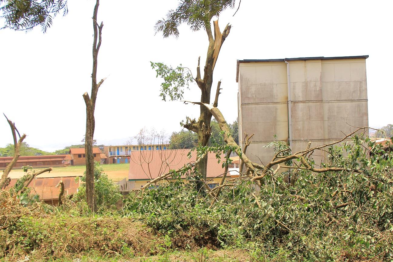 Le crime environnemental à l'ISDR-Bukavu continue par les agents et leurs épouses